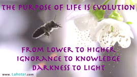 The purpose of life…