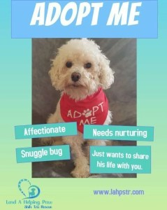Kenzo Bichon Pet Flyer
