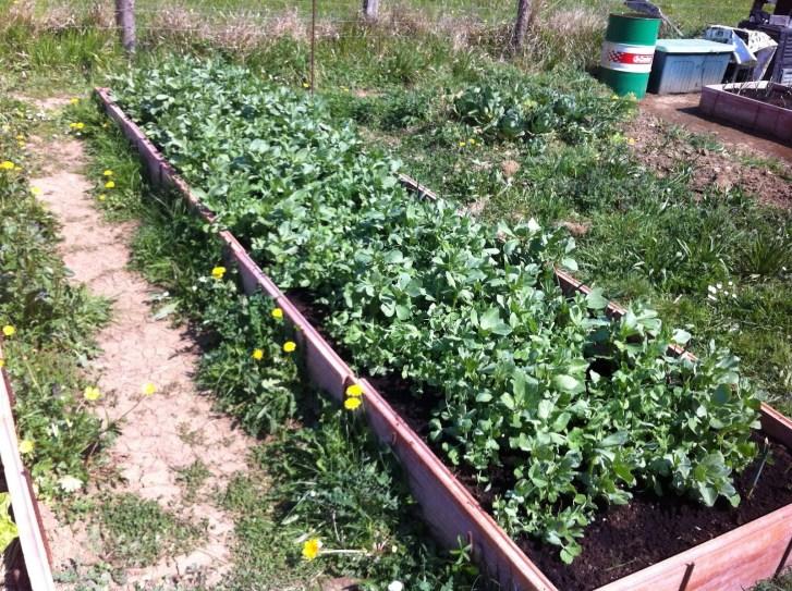 Green fertilization