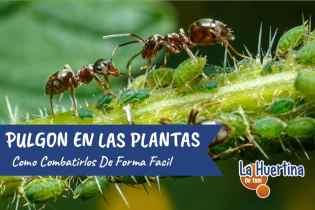 Conoce Y Combate El Pulgón En Tus Plantas O Huerto