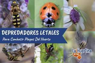 Los 10 Depredadores Que Mas Aterrorizan A Las Plagas Del Huerto