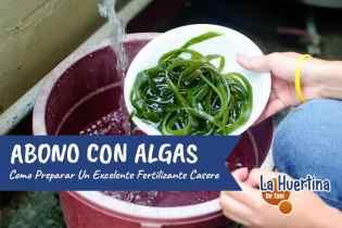 Como Hacer Fertilizante De Algas