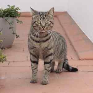 20 métodos para evitar gatos en tu huerta