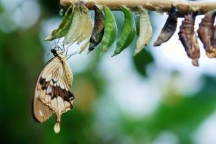 ¿Son buenas las mariposas para el huerto?