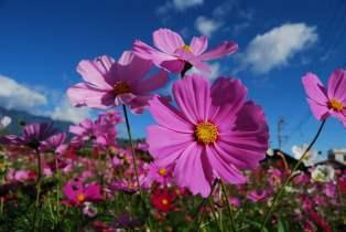 10 Flores imprescindibles en nuestro Huerto o Jardin