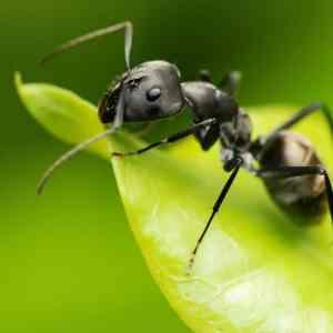 Como Preparar Un Spray Casero Eficaz contra las hormigas