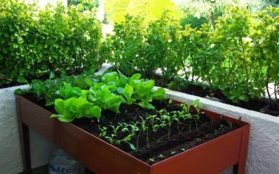 Maceto-Huerto: Macetas adecuadas para cultivar