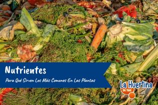 Para Que Sirven Los Nutrientes Mas Comunes En Las Plantas