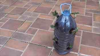 Como Plantar Fresas O Frutillas En Botellas Recicladas