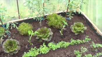 Que Cultivar En El Invernadero En Invierno