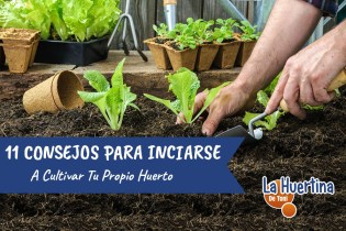 11 Consejos Para Comenzar A Cultivar En El Huerto
