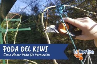 Como Y Cuando Podar El Kiwi – Poda De Formación