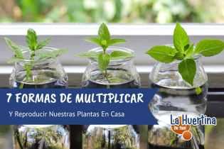 7 Formas Sencillas De Reproducir Nuestras Plantas
