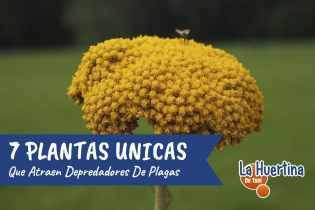 7 Plantas que atraen Depredadores a la Huerta y de que se Alimentan
