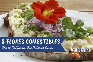 8 Flores que Podemos Cosechar en la Huerta para Comer