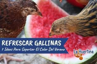 7 Formas de Refrescar Las Gallinas en El Calor Del Verano