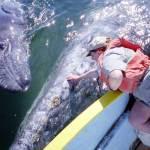 Sobre la intencionalidad de los cetáceos