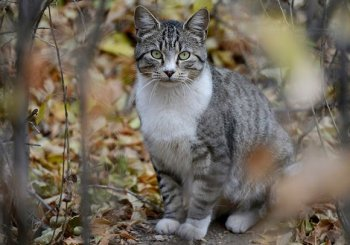 feral-cats-image