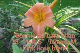4-Bonnie Hour