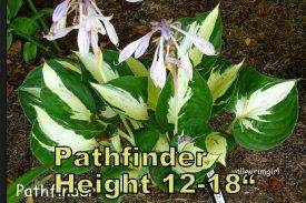 Pathfinder hosta