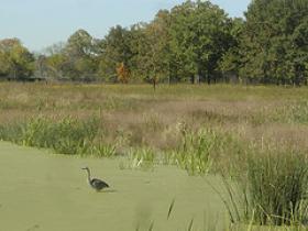 Bird watching at Middlefork Savanna