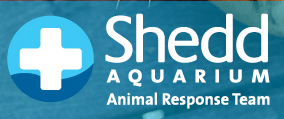 Shedd Aquarium's Animal Response Team @ Shedd Aquarium | Chicago | Illinois | United States