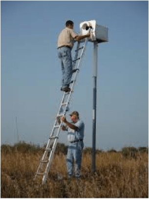Terry Esker Barn Owl Recovery Program