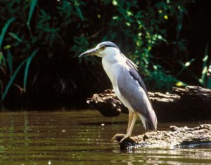 Heron Creek @ Heron Creek Forest Preserve | Long Grove | Illinois | United States