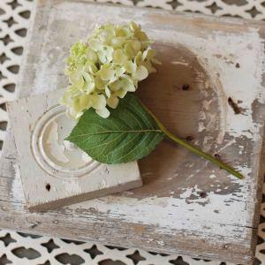 Hydrangea Pick Green