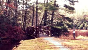 Bridge to Malonee Trail crosses the stream feeding into Balsam Lake NC