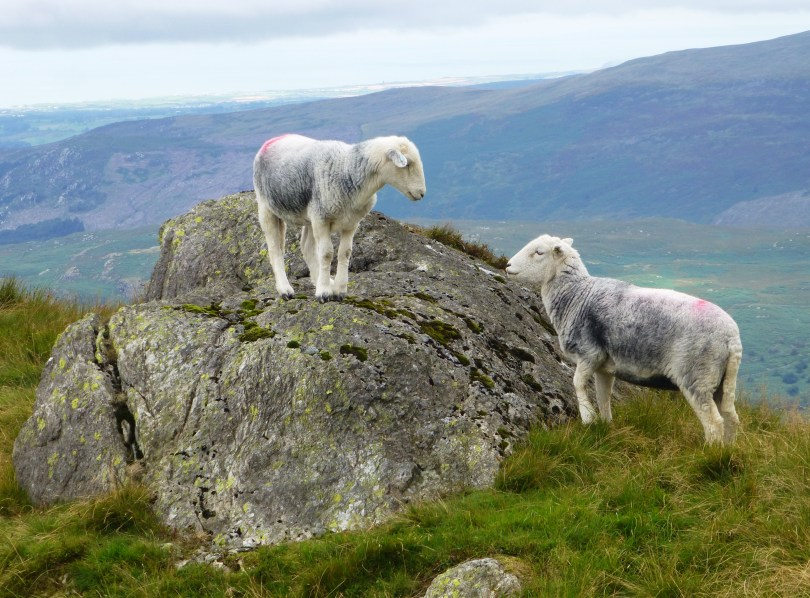 Herdies vye for position on Harter Fell