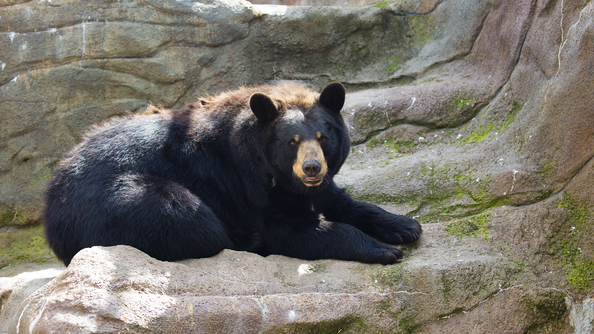 American black bear at Lake Tobias Wildlife Park