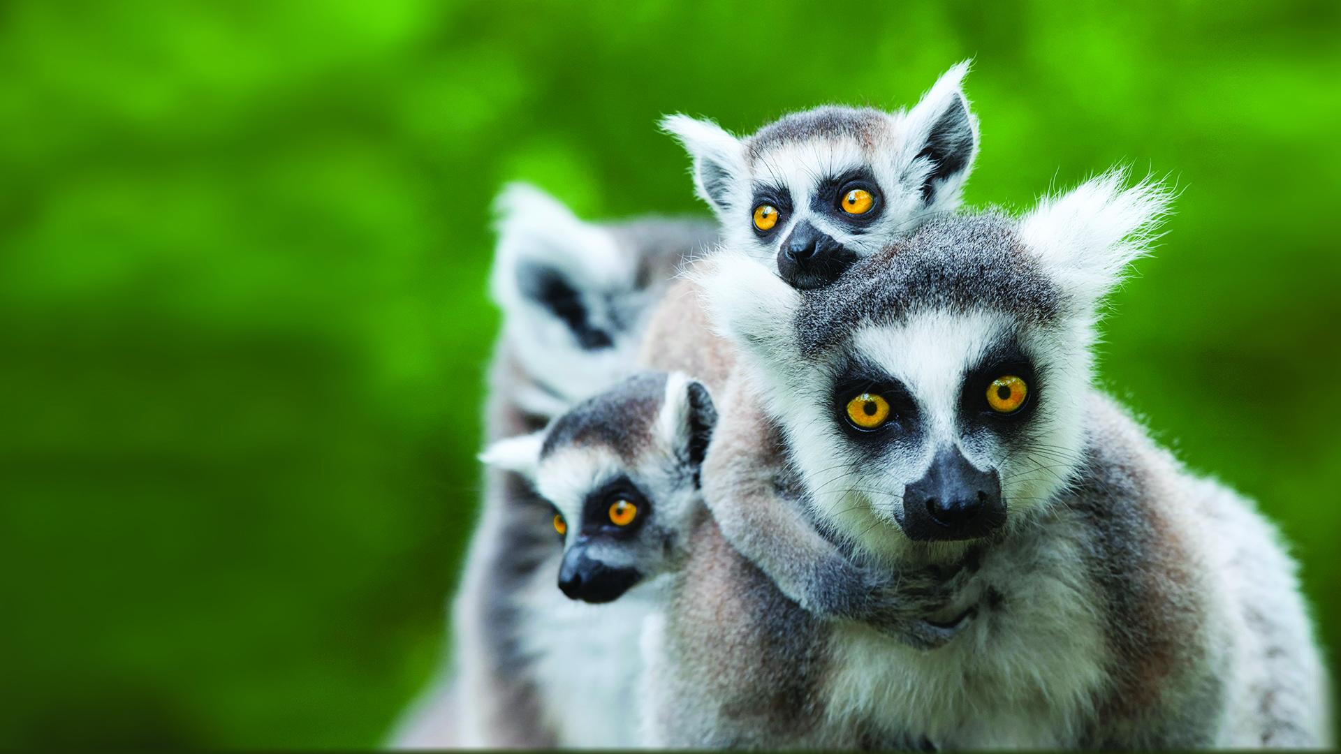 Lemurs at Lake Tobias Wildlife Park