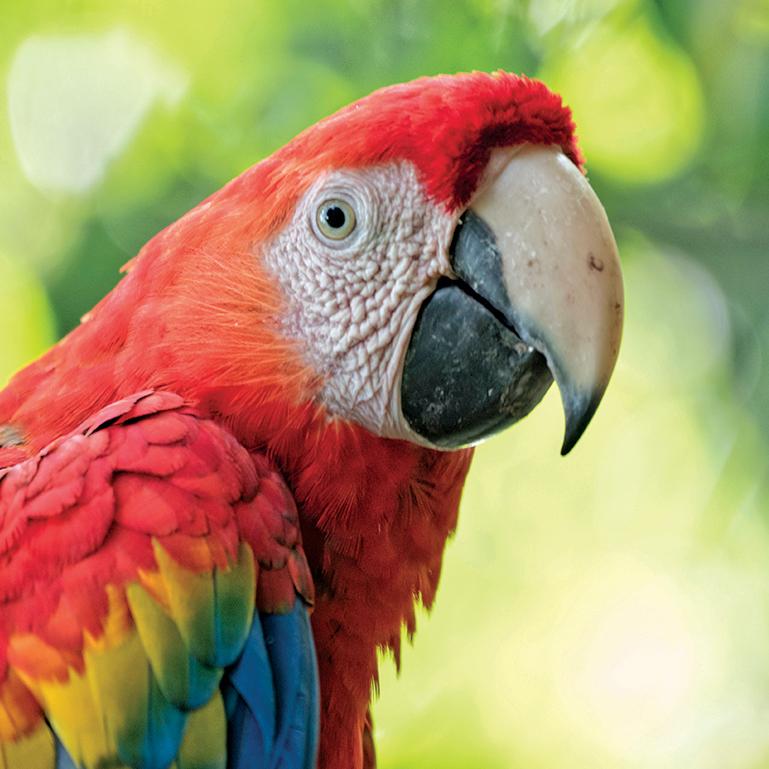 Scarlet macaw at Lake Tobias Wildlife Park