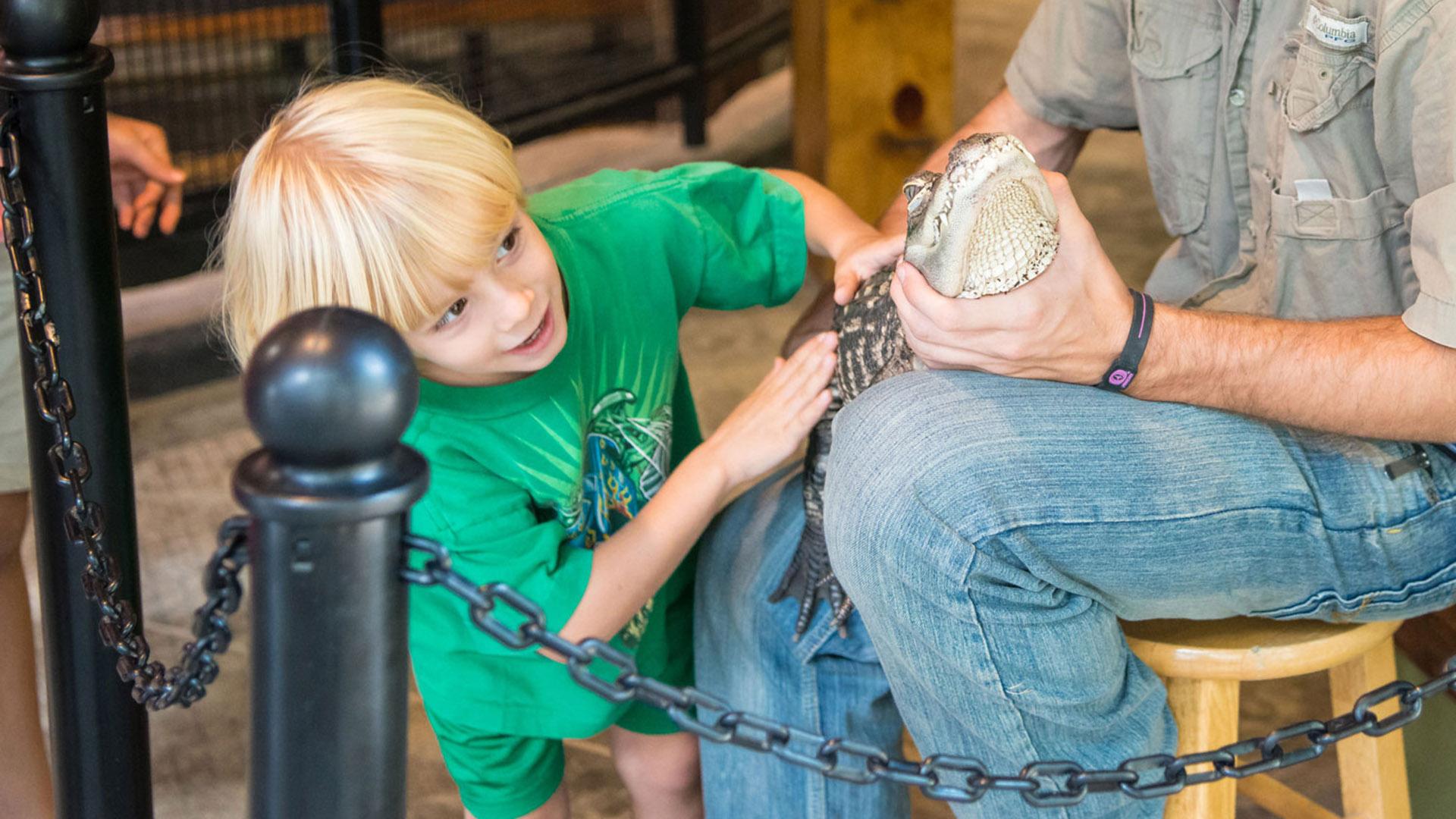 Boy touches alligator at Lake Tobias Wildlife Park Reptiles & Exotics Building