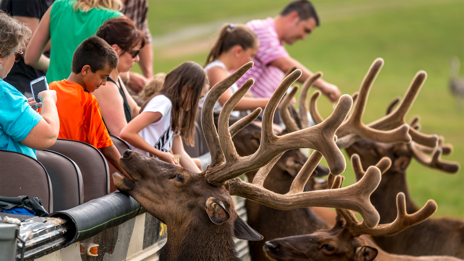 Touch and feed real animals at Lake Tobias Wildlife Park