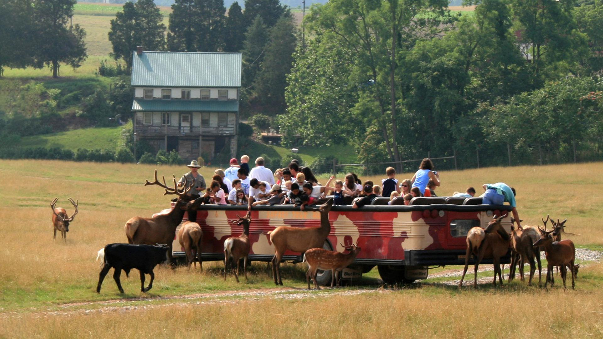 Safari Tour at Lake Tobias Wildlife Park