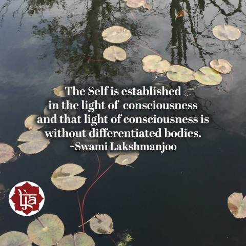 The Self is established in the light of consciousness and that light of consciousness is without differentiated bodies. ~Swami Lakshmanjoo