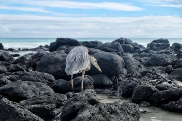 Een reiger op het strand