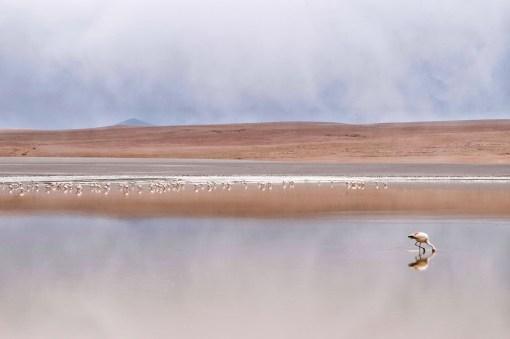 La La Leo - Salar de Uyuni_10
