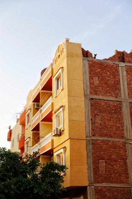 Hond op een flatgebouw in Dahar