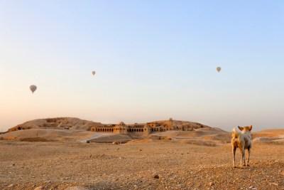 Hond kijkt naar zonsopgang bij de east-bank met luchtballonnen