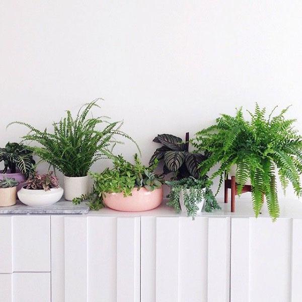 la-la-loving-plants