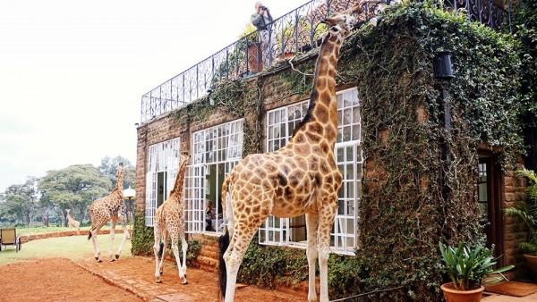 Giraffe-Manor-Hotel-Amazing-600x338