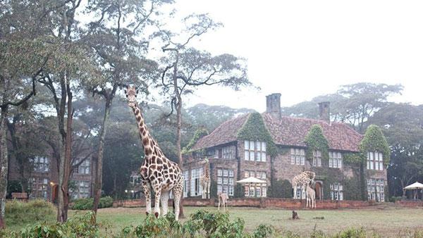 giraffe-manor_lalalovely