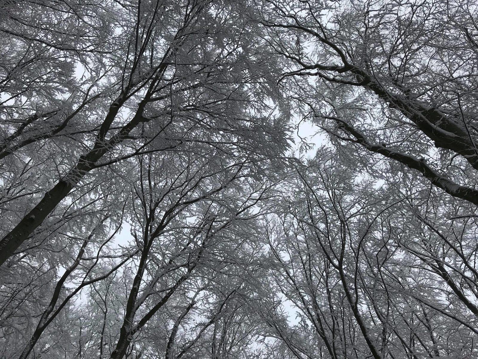 Ermitage im Winter