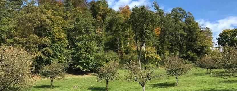 Ruine Bärenfels