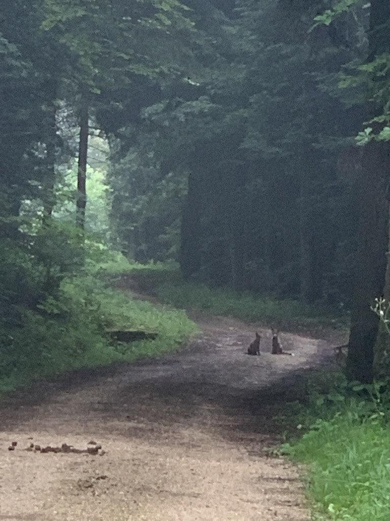 Fuchswelpen beim Grabenschlag