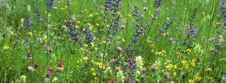 Biodiversität – wenig ist schon mal ein Anfang…
