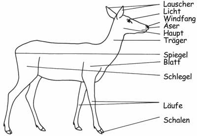 Reh - Das Jagdbrauchtum